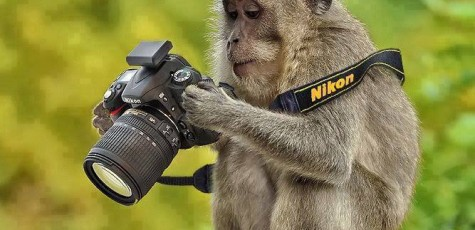 Funny-Monkey-And-Camera-Wallpapers